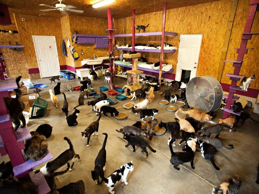 Animal Rooms